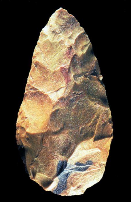 img_12-amigdala-courtesy-museo-fiorentino-di-preistoria